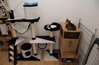 Kattenlogica 8
