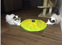 Mauws.nl - Cat's Meow