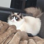 Mauws en Mimi kattenblog