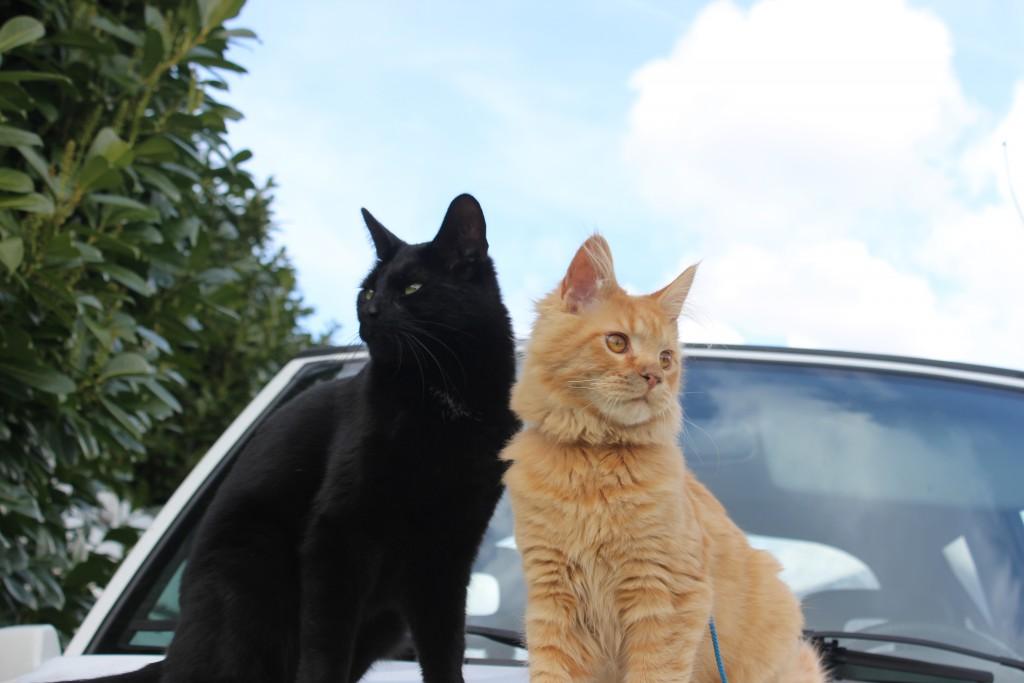 Mauws en Mimi - Jesper rode kat