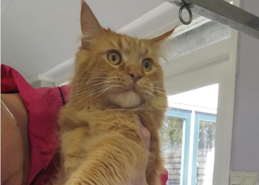 Katten Jesper