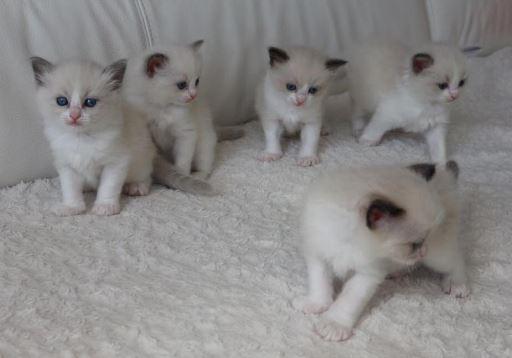 Kattengedicht kitten