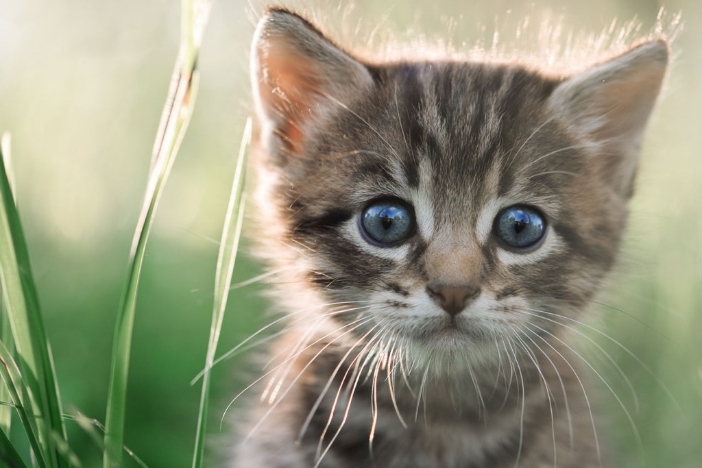 Kattengedicht de vermissing