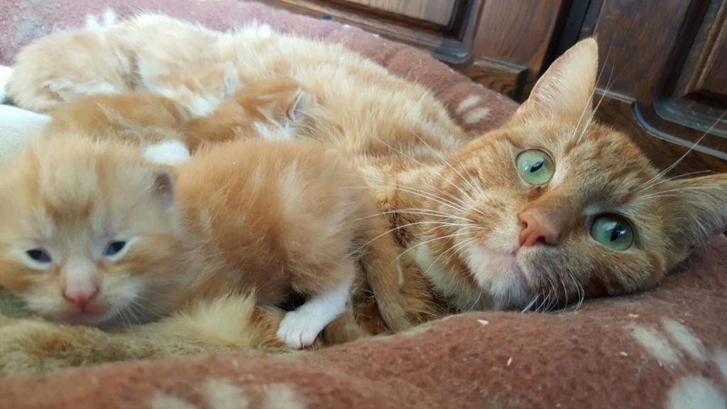Kattengedicht ik zal er voor je zijn