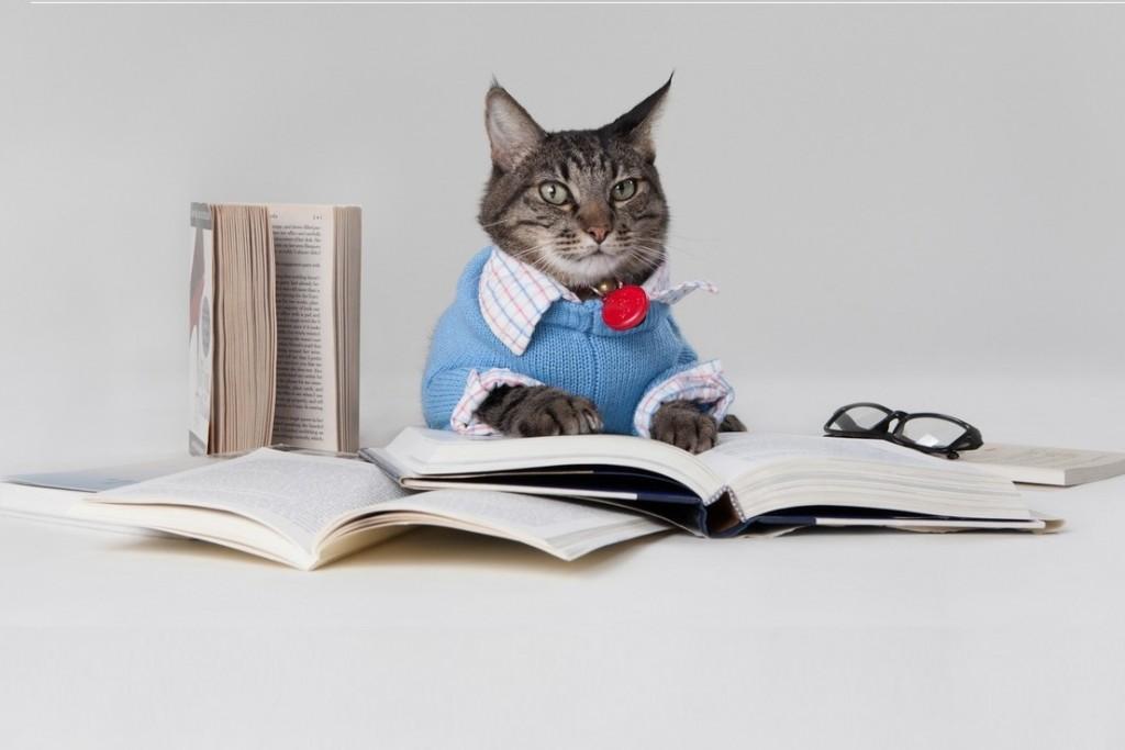 Kattenmensen zijn slimmer dan hondenmensen