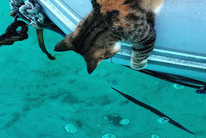 Mauws-en-Mimi-Vrouw-neemt-kat-mee-op-zeilreis15