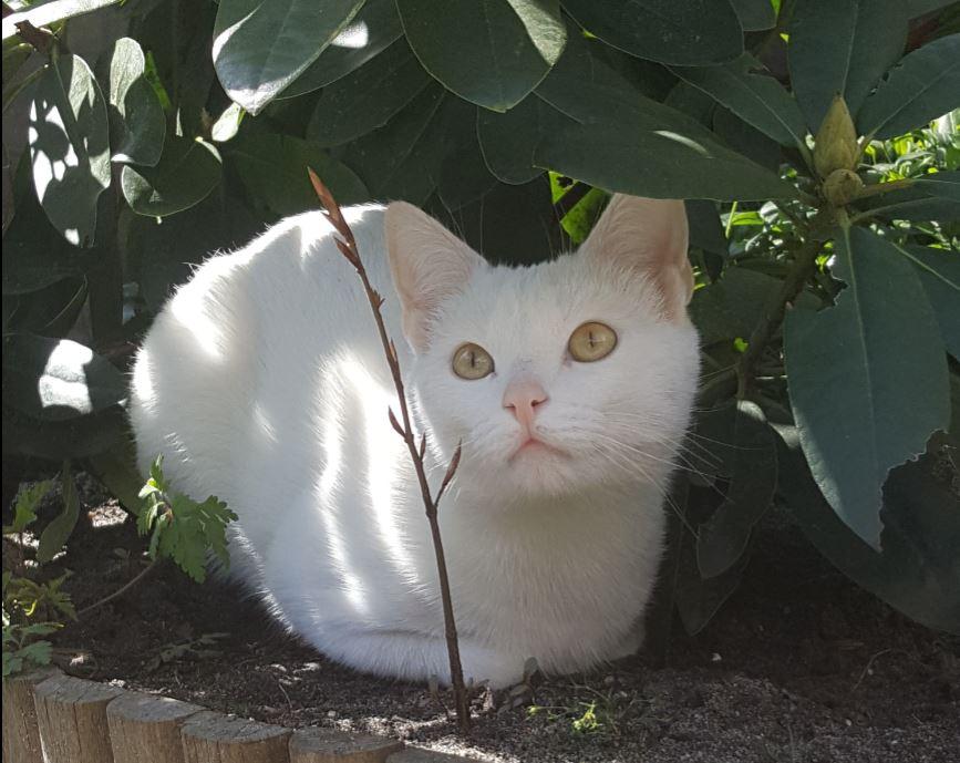 Bram, een dove kat met een gouden karakter