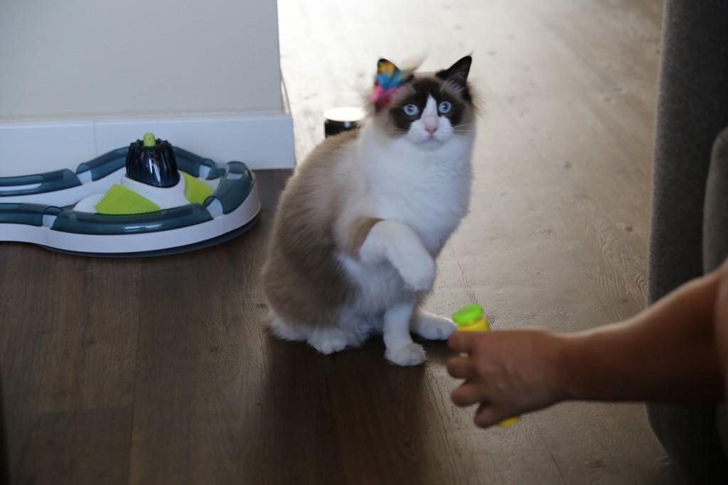 Mimi spelen met vlinder action
