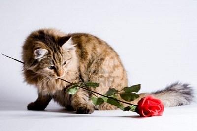 12 redenen waarom je kat de perfecte date voor Valentijnsdag is