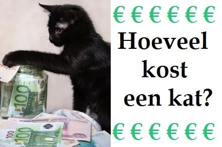 Hoeveel kost een kat