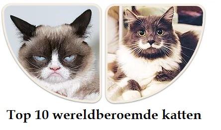wereldberoemde katten