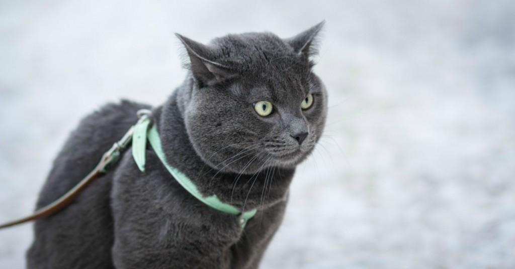 Mauws en Mimi - Loslopende katten binnenkort verboden