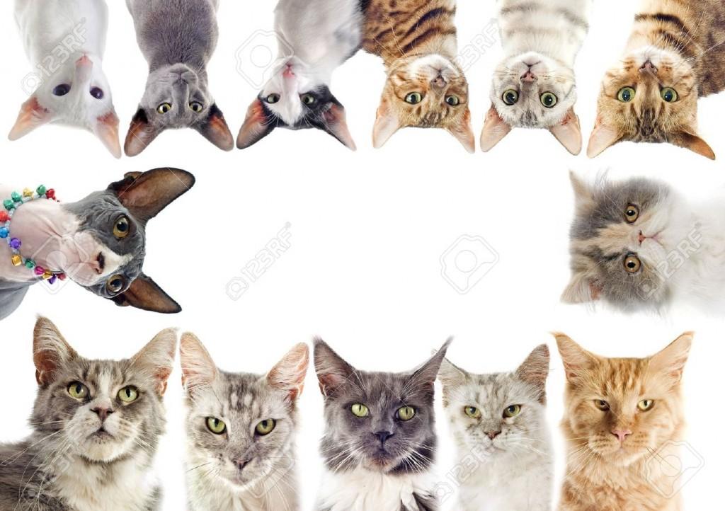 Mauws.nl - Soorten katten op de wereld