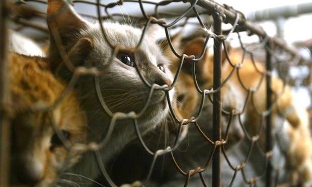 Taiwan verbiedt eten van kattenvlees