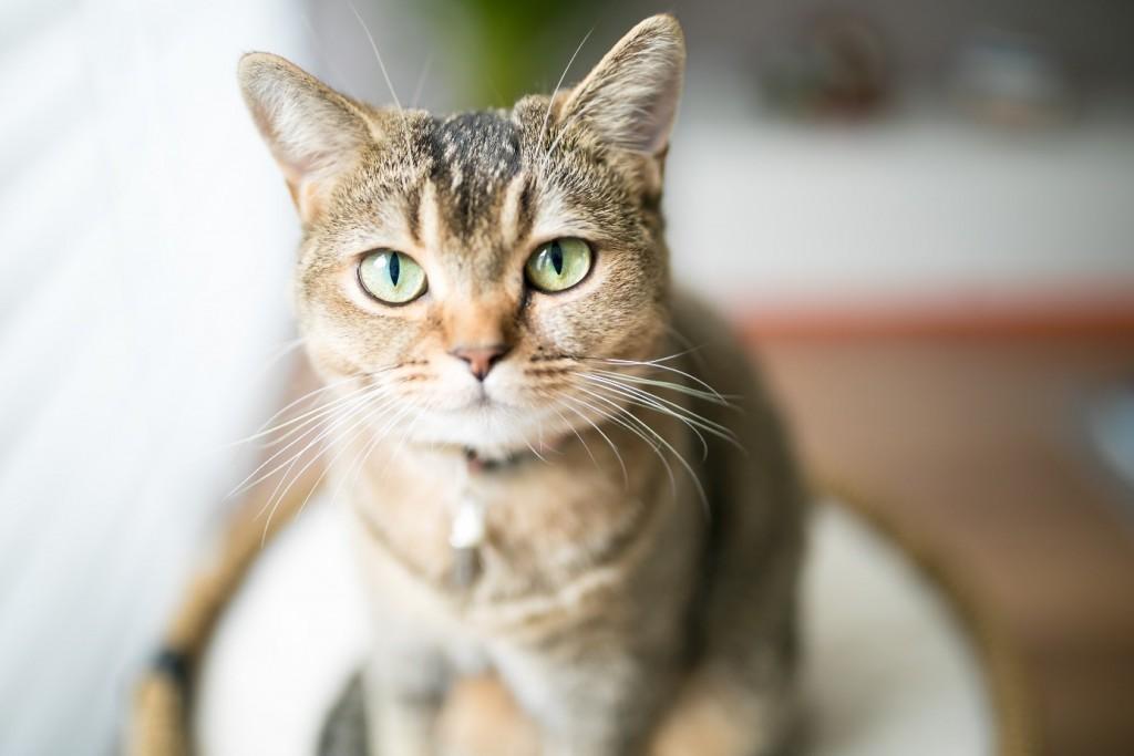 Een betere band met je kat in 5 stappen