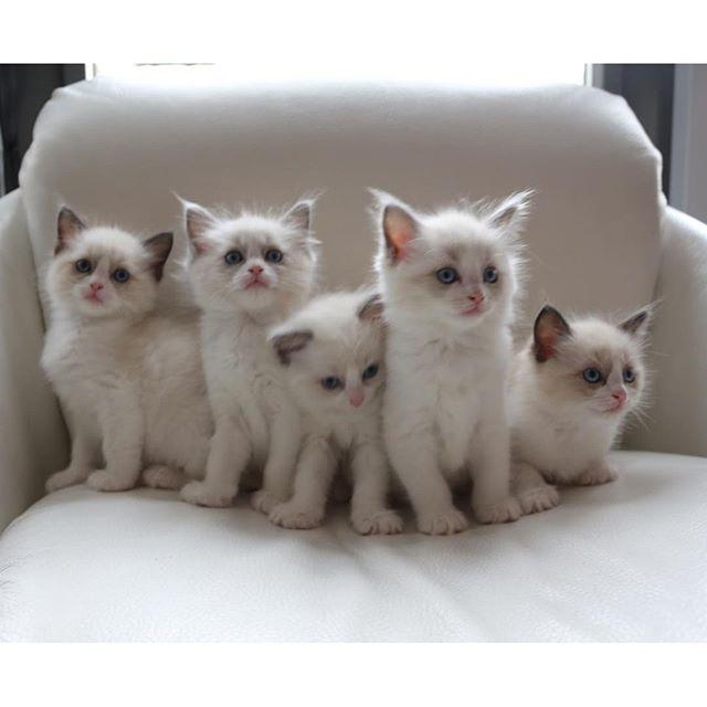Kittens te koop