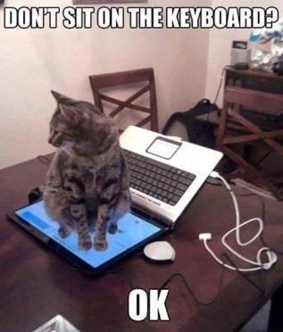 Kattenlogica 2