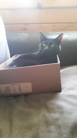 Snickers - kat in doos