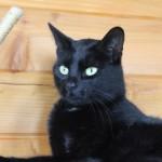 Snickers - zwarte kat