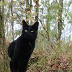 Snickers - zwarte kat in het bos