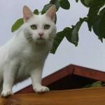 Mauws en Mimi - Snickers Bounty witte kat