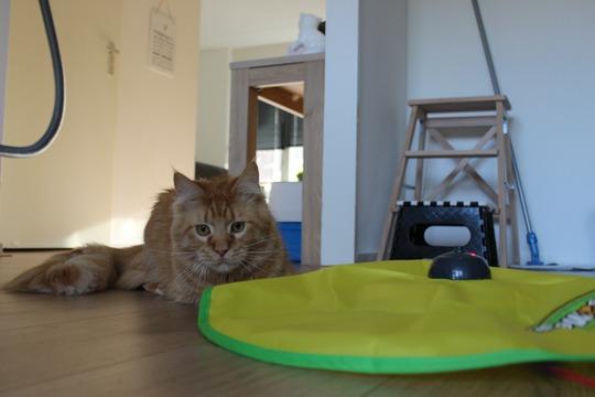 Mauws en Mimi - Jesper en Cat's Meow