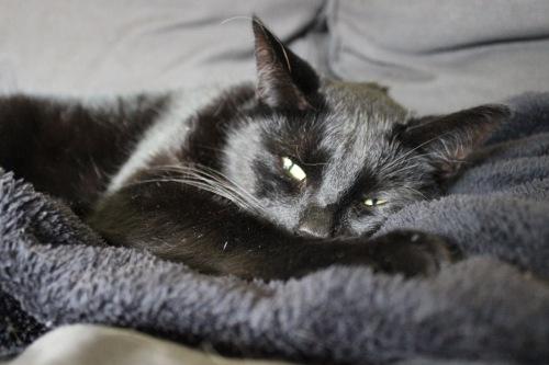 Mauws en Mimi - Snickerszwarte kat ziek