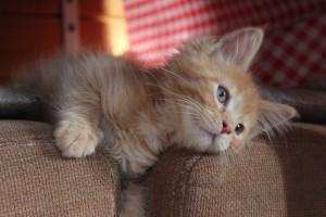 Mauws en Mimi - Snickers Jesper rode kat