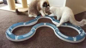Sascha en Lenny met de Catit Sense