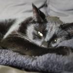 Mauws en Mimi - Snickers zwarte kat