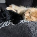 Mauws en Mimi - Jesper en Snickers