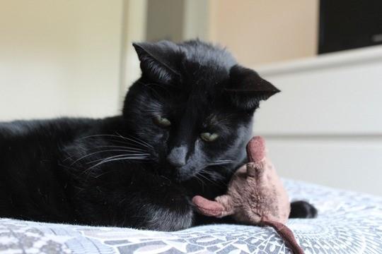 Mauws-en-Mimi-Snickers in Paniek (zwarte kat)