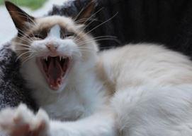 Mauws-kitten