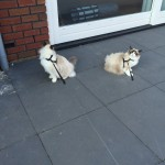 Mauws en Mimi - kat ontsnapt