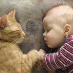 Kat wennen aan baby