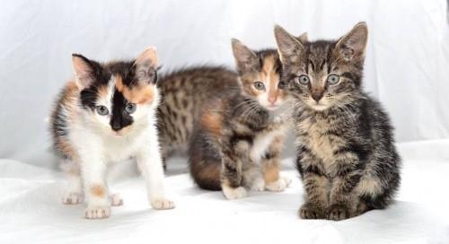 Mauws-en-Mimi - een nestje met kittens