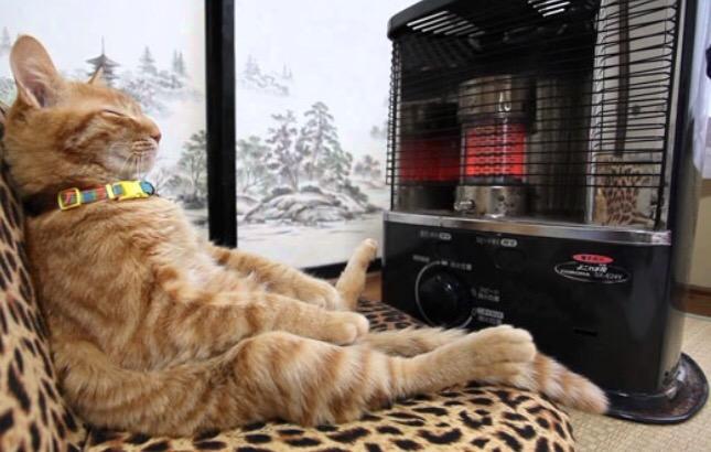 Mauws en Mimi - katten en warme plekjes - funny cats