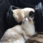 Mauws en Mimi - heenreis auto trimsalon