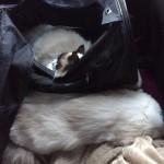 Mauws en Mimi - Auto terugreis trimsalon