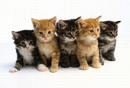 Mauws en Mimi - Hoeveel katten zijn er in Nederland?