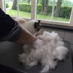 Mauws trimmen