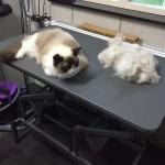 Mimi trimmen