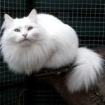 Kat bevalt van twaalfling