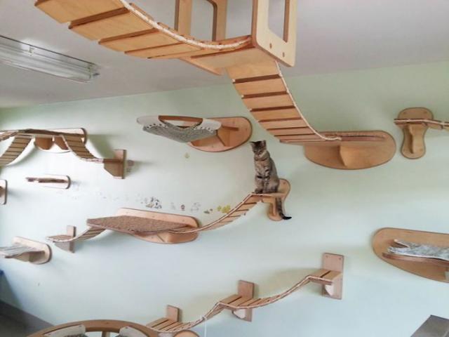 De meest geweldige kattenkamer ooit