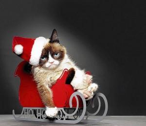 5 gevaren voor een kat tijdens kerst