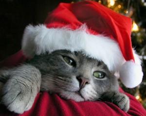 10 tips voor een veilige kerst met je katten