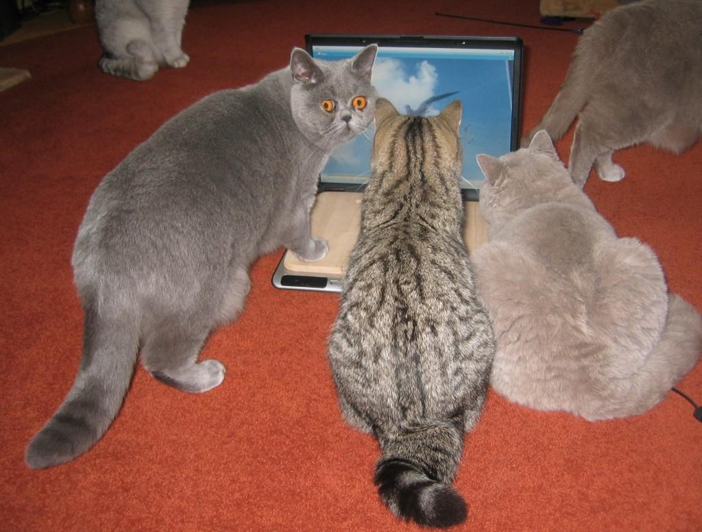dvd voor katten