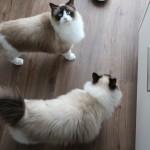 Mauws en Mimi - ontwormen van de kat