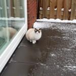 Mauws en Mimi in de sneeuw
