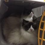 Mauws en Mimi - Weer naar de trimsalon10